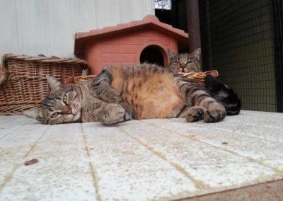 Gigi e Agnese